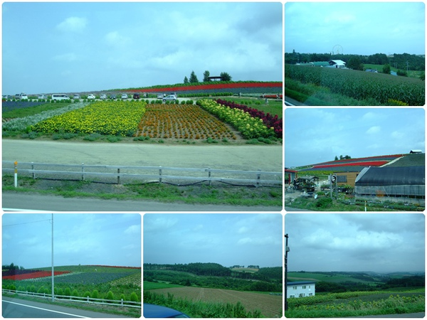 北海道之旅- (54).jpg