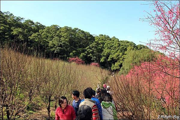 2012 杏花林- (11).JPG