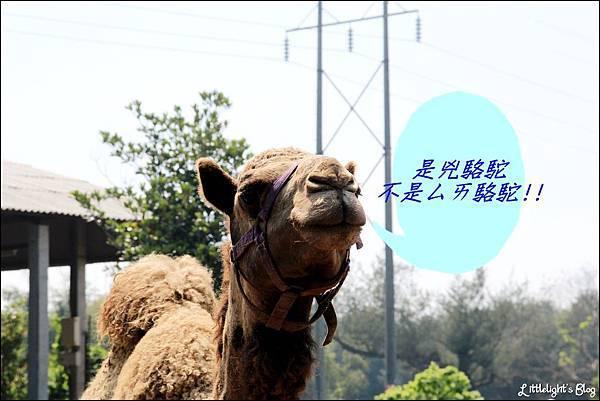月眉天馬牧場- (14)