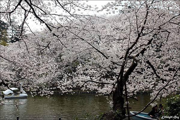2013 東京賞櫻- (1)