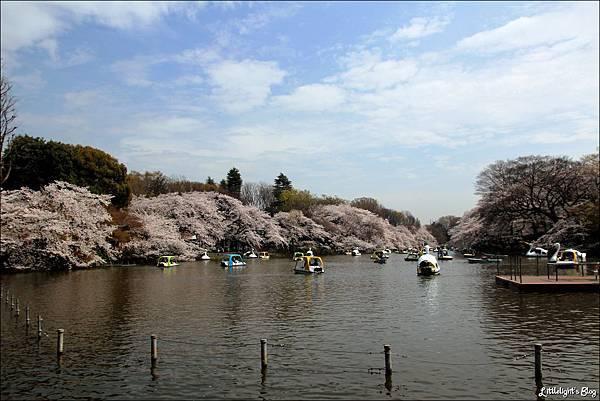 2013 東京賞櫻- (9)