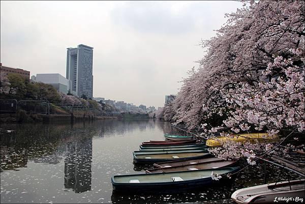 2013 東京賞櫻- (22)