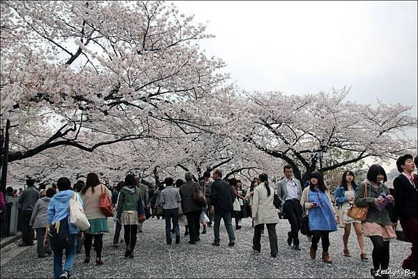 2013 東京賞櫻- (25)