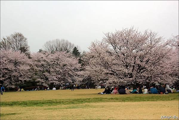 2013 東京賞櫻- (46)