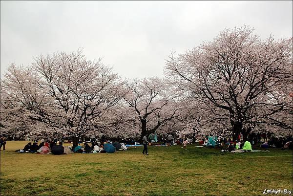 2013 東京賞櫻- (49)