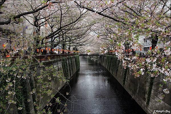 2013 東京賞櫻- (58)