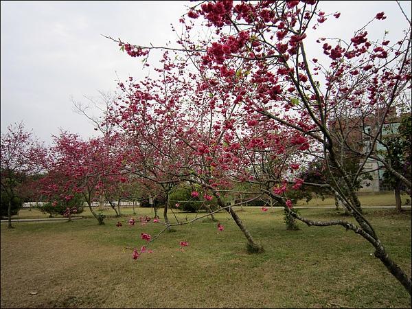 暨南大學- (33).jpg