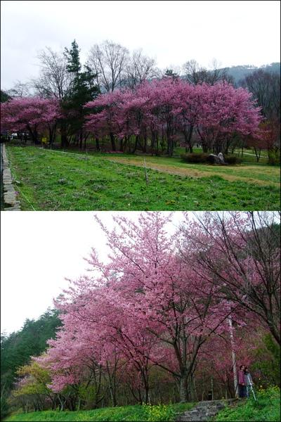 武陵農場- (64).jpg