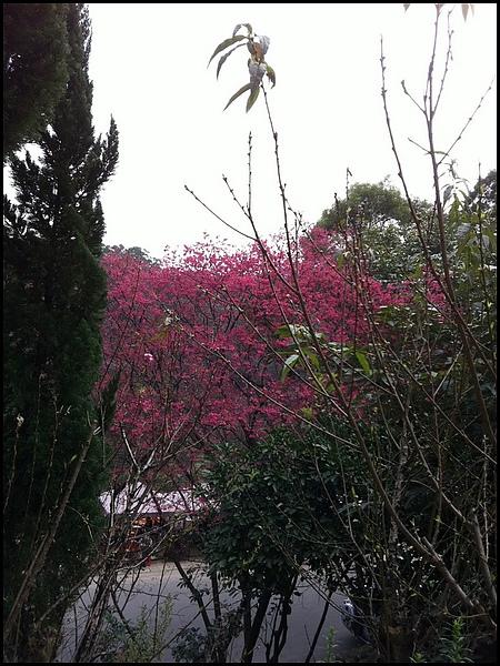 杏花林- (10)_resize.jpg