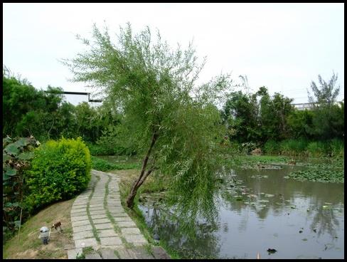 水來青舍- (2).jpg