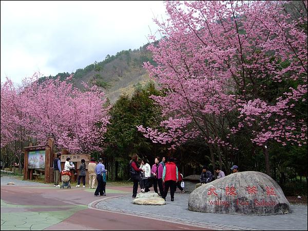 武陵農場- (40).jpg