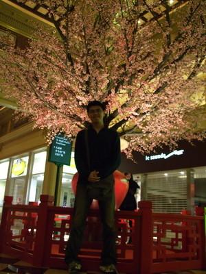 131.櫻花樹-2