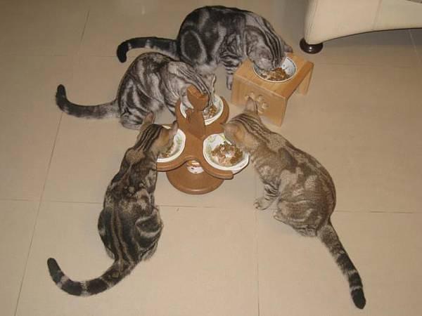 阿文的貓.jpg