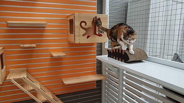 貓咪使用中_6.jpg