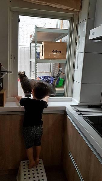 貓咪使用中_11.jpg