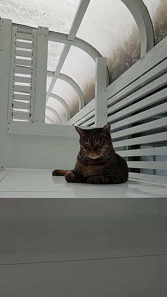 貓咪使用中_13.jpg