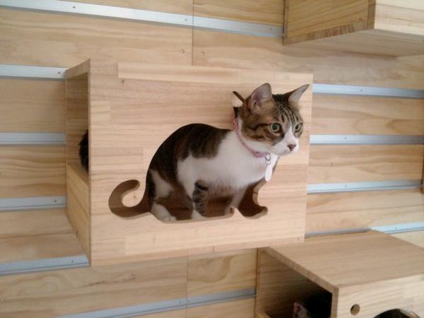 小貓-1-調光線.jpg