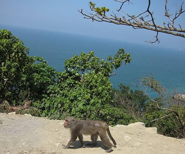 20110402_01_柴山猴子.JPG