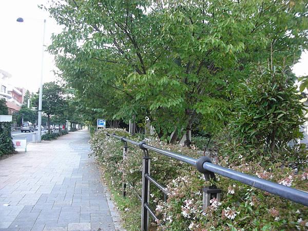 台場海濱公園旁