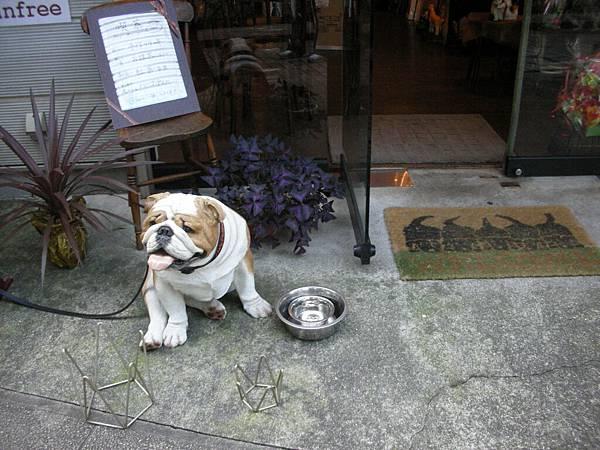 其實是假狗,店主還是貼心的放個水盆讓牠用