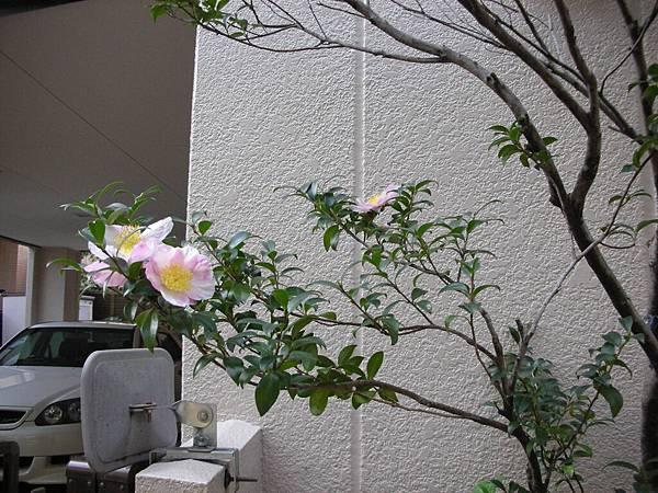不認識的美麗的花