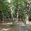 森林般的井之頭公園