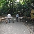好多人在溜各式各樣的狗,很適合寵物當家來拍外景,讓大介認識其他狗狗喔