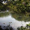 優游的小水鴨