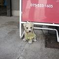 狗狗看家的寵物美容店