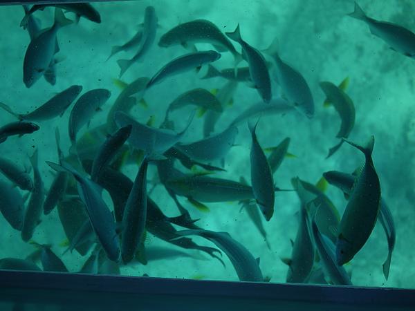 超多熱帶魚