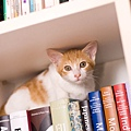 花絮-電影中有許多貓咪鏡頭