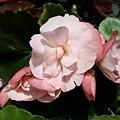 20140417_私人小花園11.jpg