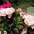 20140417_私人小花園12.jpg
