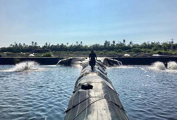 溪和觀光工廠-海水白蝦