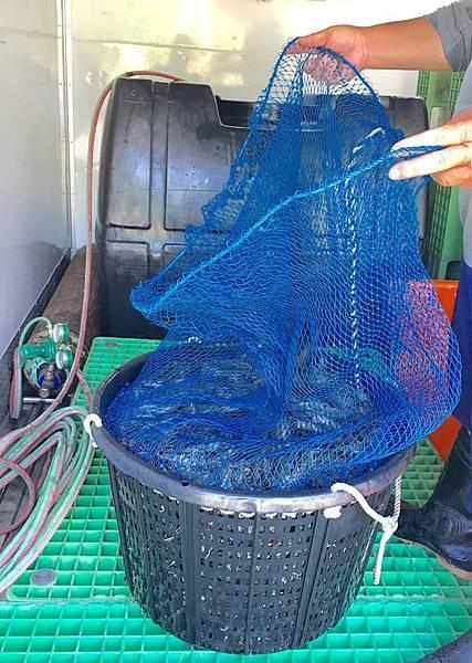 6n溪和觀光工廠-海水白蝦