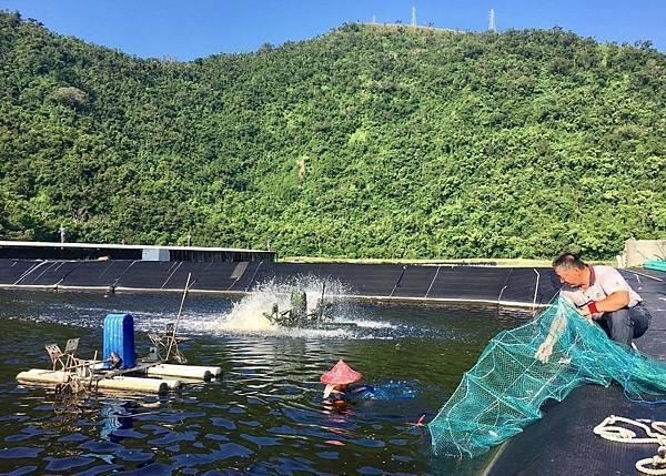 宜蘭溪和觀光工廠-海水養殖白蝦