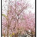 2011.03.26-14.jpg
