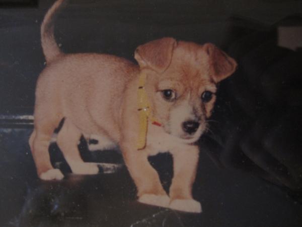 1994年天秤座皇帝ㄚ仔誕生