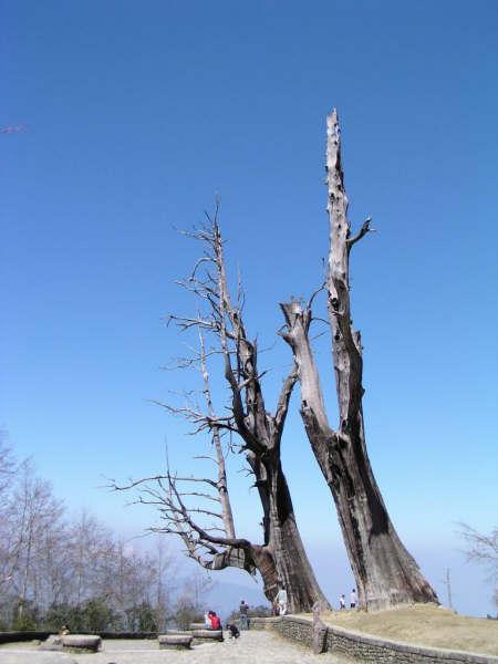 夫妻樹.JPG
