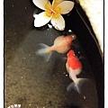 民宿外之魚缸.jpg.jpg