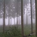 迷霧森林.JPG