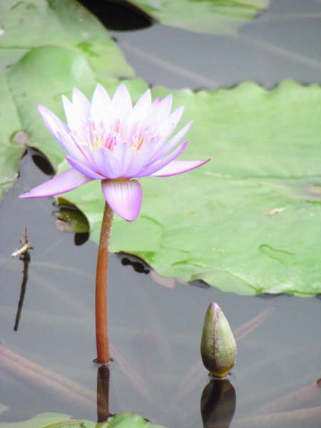 未來就像是一朵花,召喚種子向著它生長