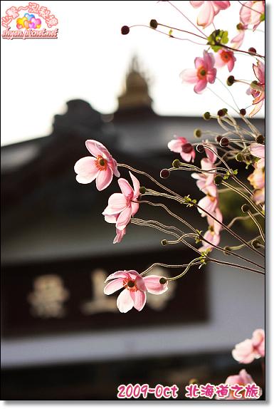 北海道之旅11.jpg
