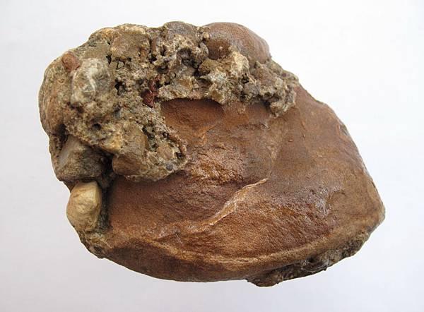 5.肉型石正