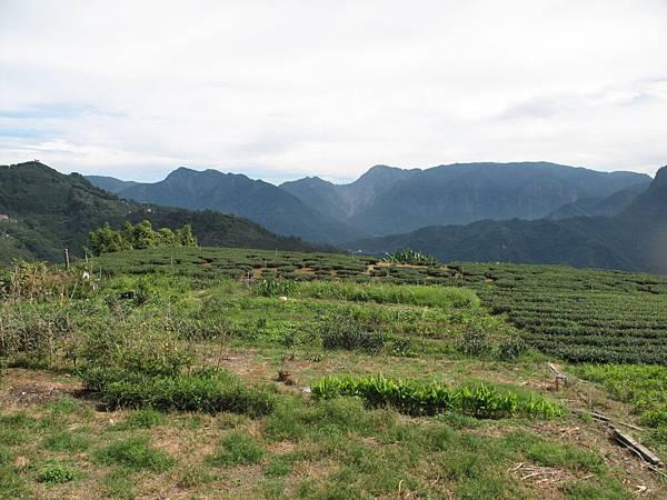 106.05.26-阿源茶園之行 青翠山巒 (3)