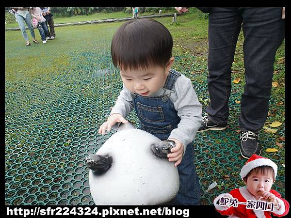 兔寶_五股生態莊園8