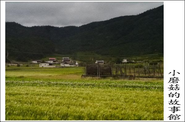 前往獨克宗古城途中之美景102.8.5.(1).JPG