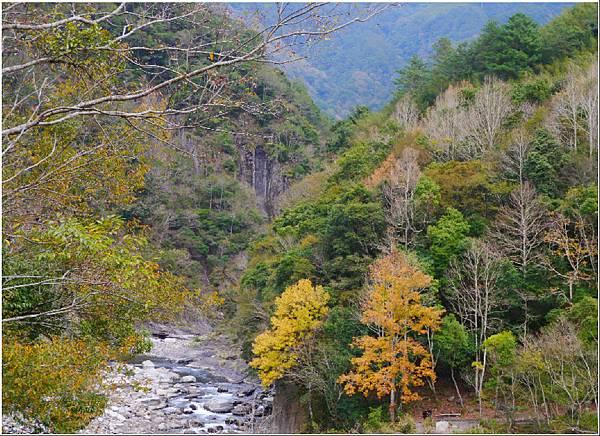 103.12.14.(145)新竹尖石-控溪吊橋賞楓.JPG
