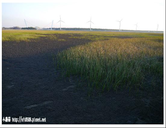 105.07.16.(21)台中-高美溼地.JPG