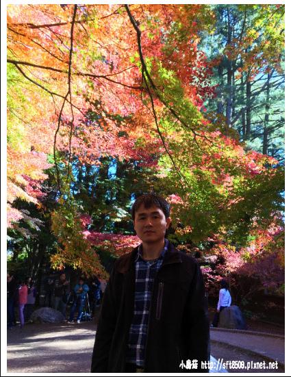 105.11.20.(32)福壽山農場賞楓.JPG